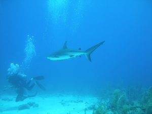 Diver Diving With Shark