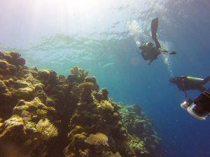 Large Reef