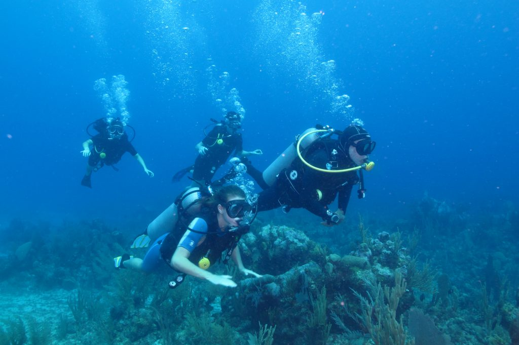 Divers In The Caribbean