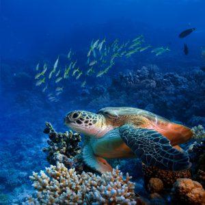 Beautiful Sea Turtle