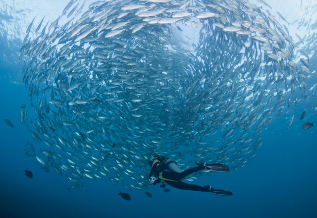 Diving in Bali With a School of Jacks