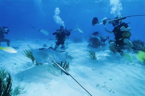 Stingrays With Divers