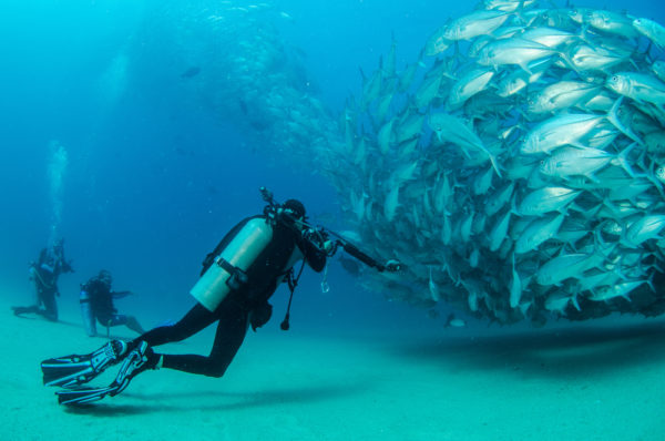 Diving With a School of Travally