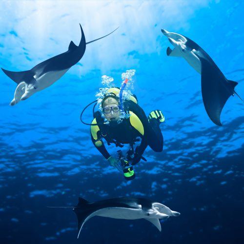 Dive having Fun With Manta Rays