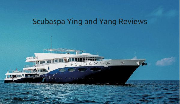 Scubaspa Ying and Yang Reviews